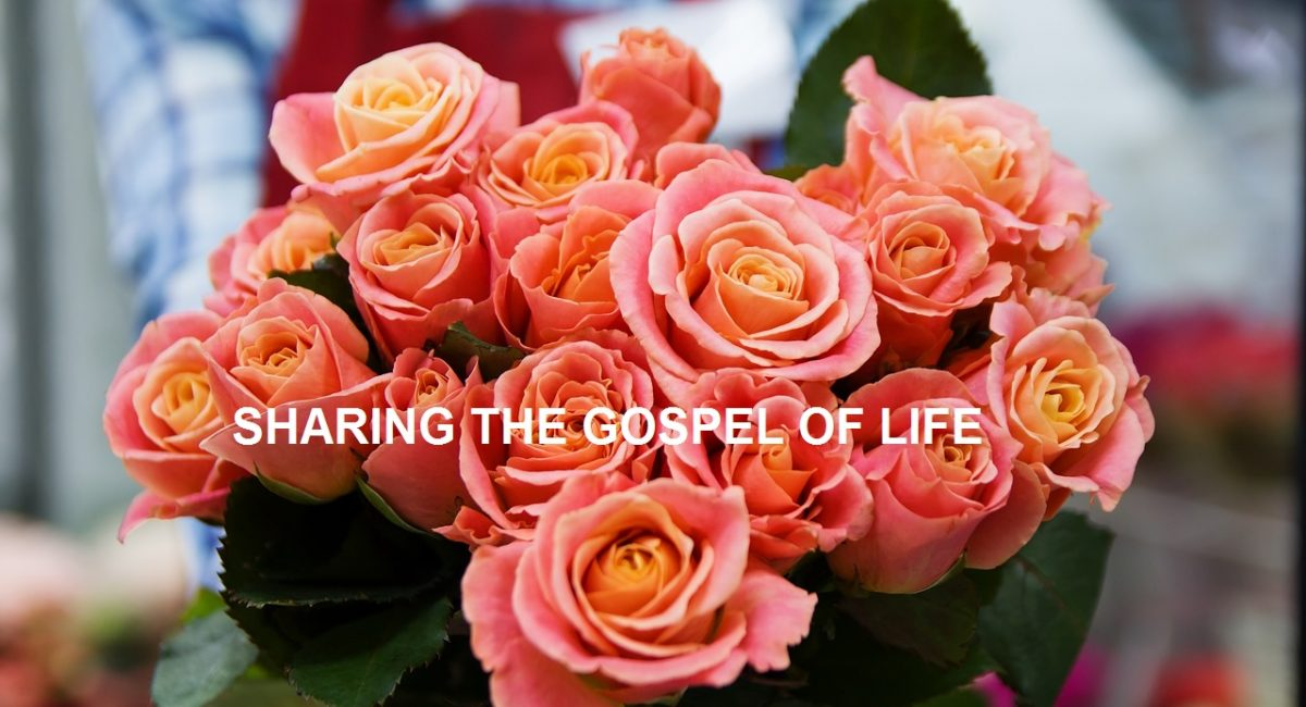 Joy of the Gospel
